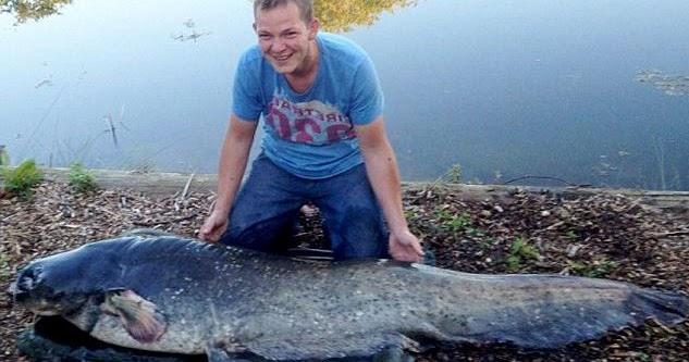 International Fishing News Uk Biggest Wes Catfish Ever