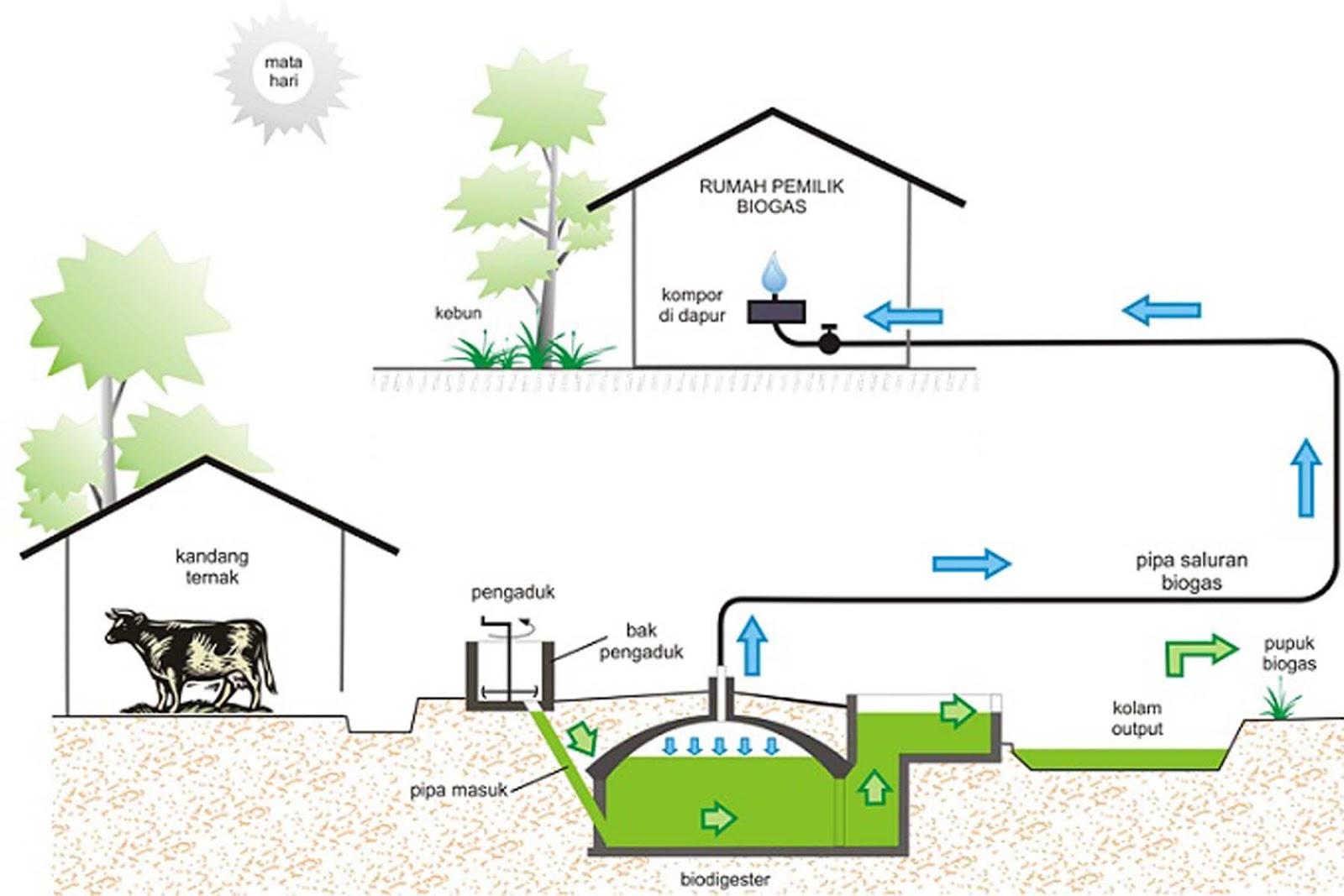 Gerai Arsitek: Proses Pembuatan Biogas Dari Kotoran Sapi