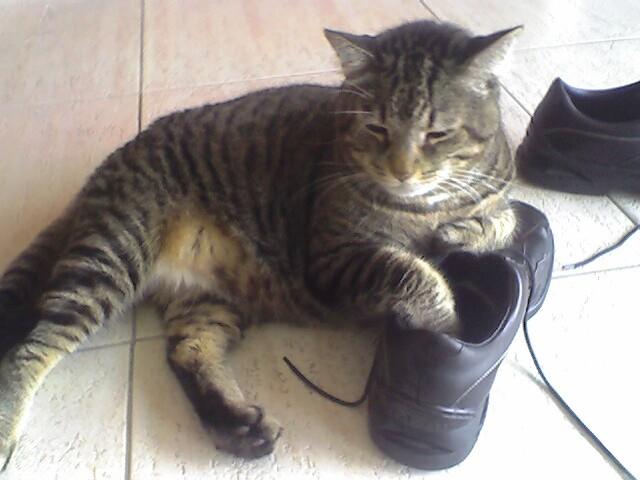 Pet Hoe For Feline Lymphoma