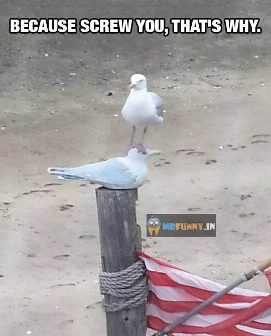 Seagull bully