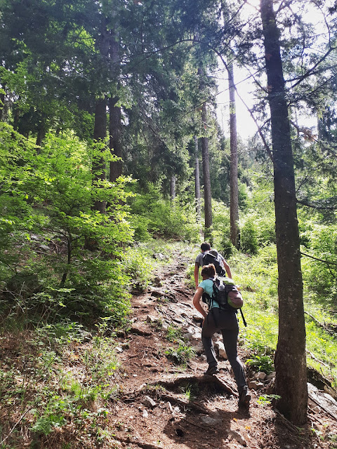 Steep hiking trail to the dromae fields in Valle di Ledro