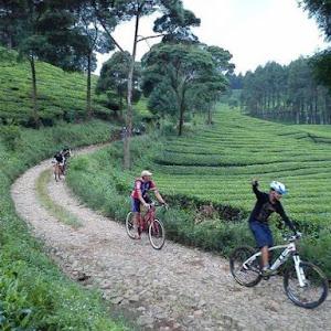 Manfaat Bersepeda Santai