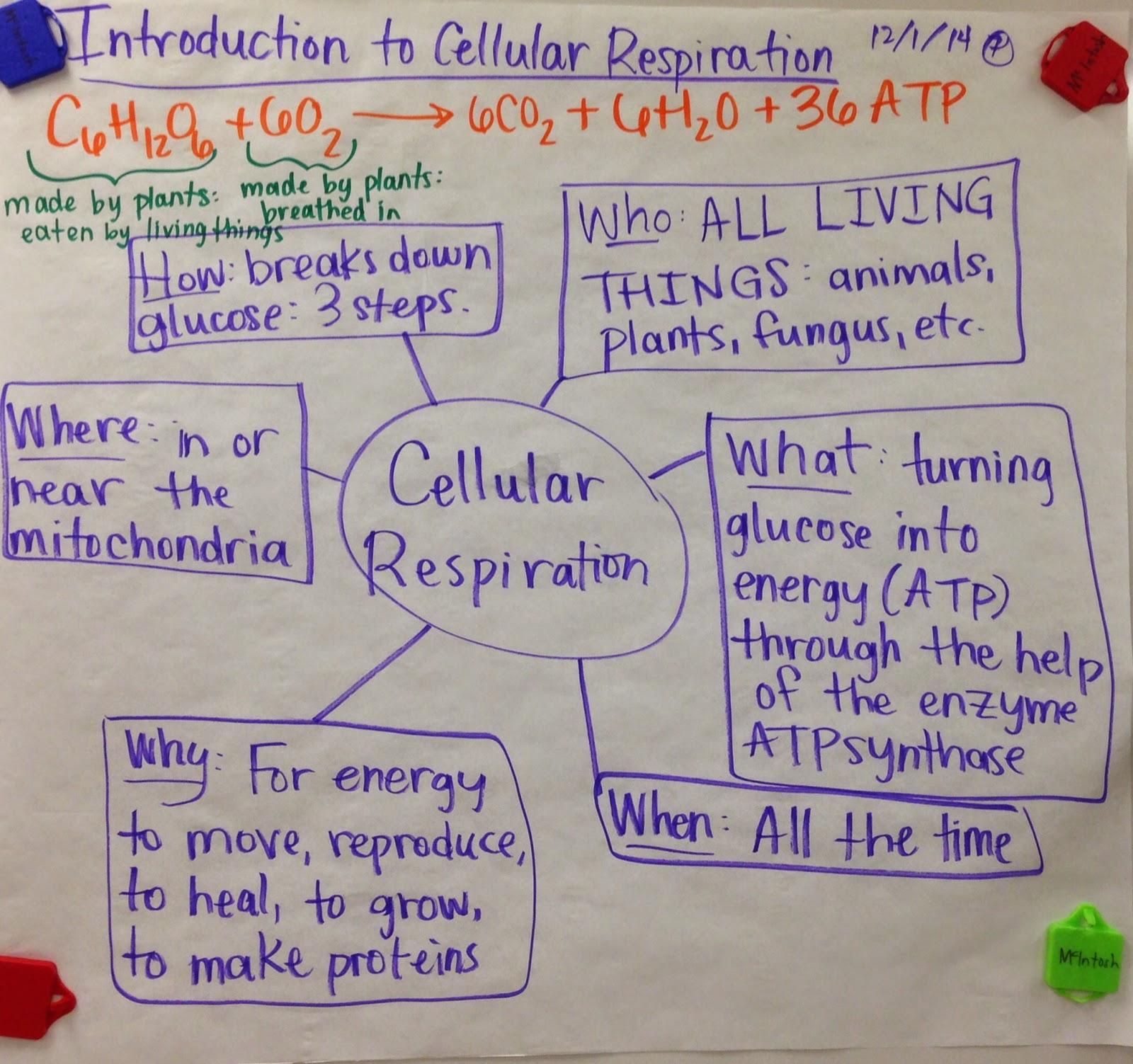 Mrs Paul Biology 10th Grade Biology Notes Charts