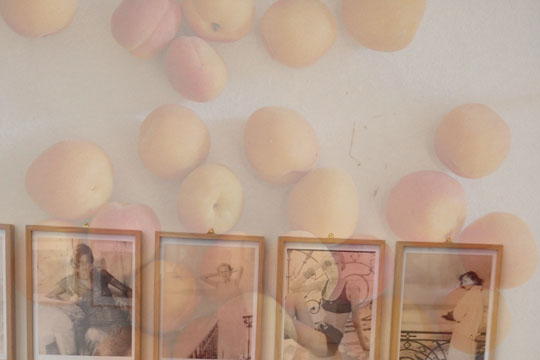 Saftige Aprikosenquadrate mit Mandeln und Ricotta