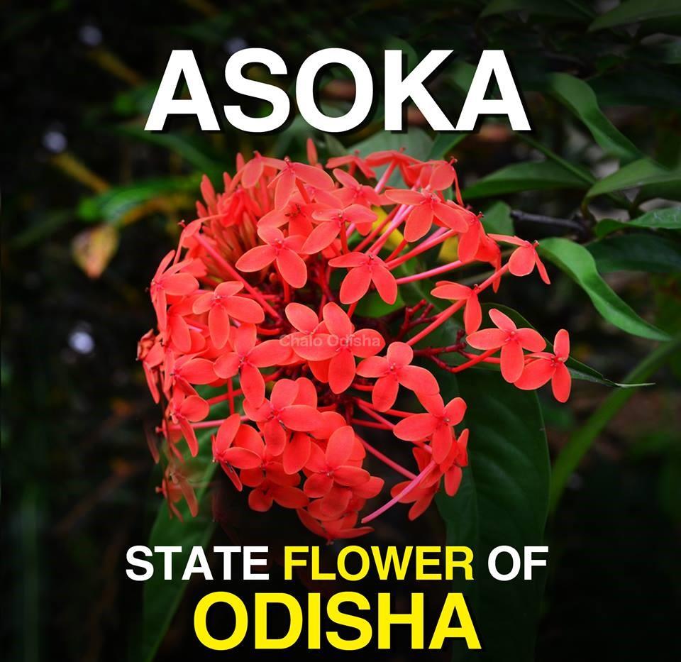 Facts State Symbols Of Odisha