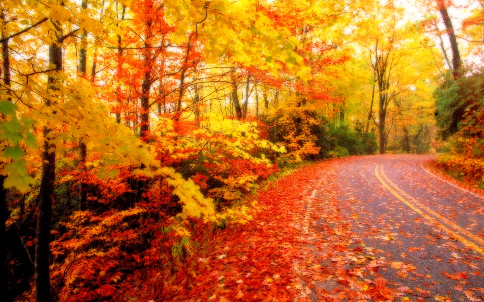 All new wallpaper : The beautiful autumn wallpaper for ...