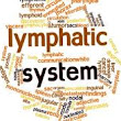 Lymphatic System and Burdock Root
