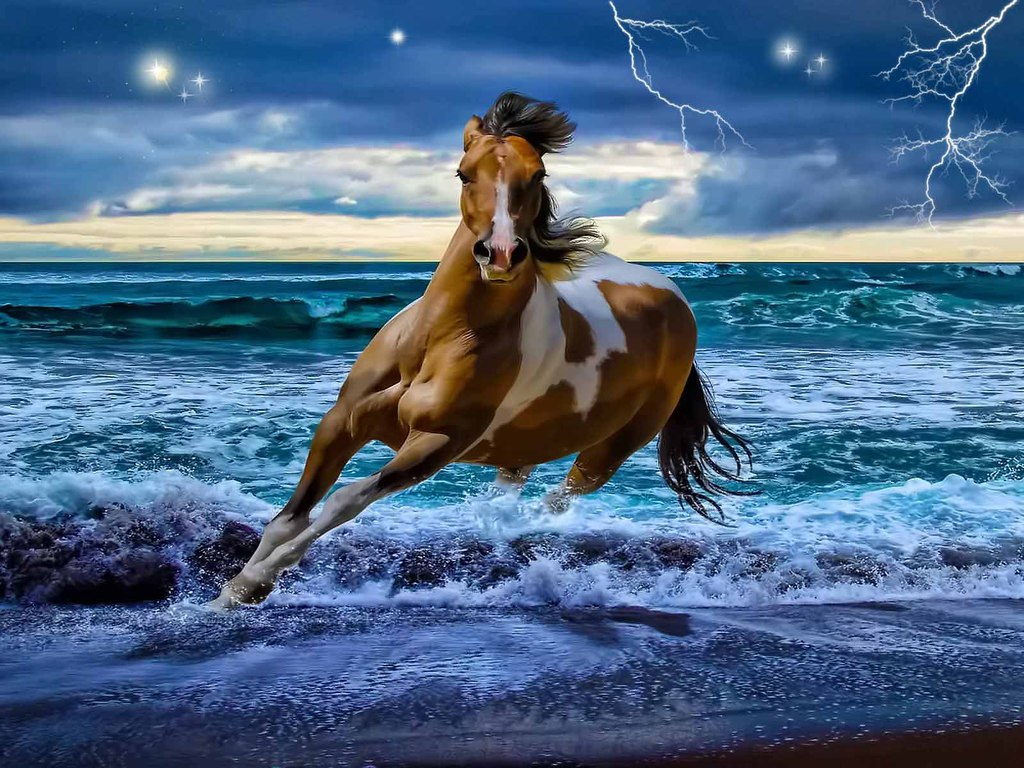 High Resolution Wallpaper: Amazing Horse Wallpapers