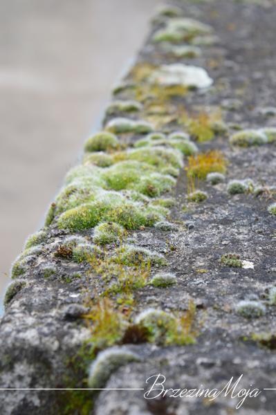 mchy i porosty kamień