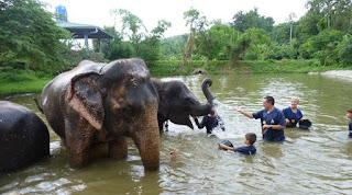 Baanchang Elephant Park de Chiang Mai.