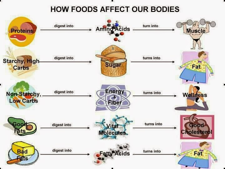 hover_share weight loss - how foods affect our bodies