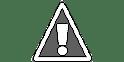 10 Gigantic Creatures Found on The Shores of Karachi