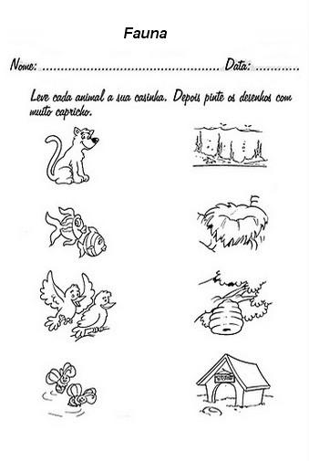 Fauna Animais 60 Atividades E Desenhos Semana Da Fauna 21 A 27