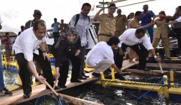 Potensi Budidaya Ikan Kerapu Desa Tanjung Jaya