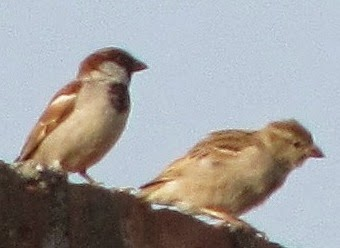 Sparrows are seen in surroundings