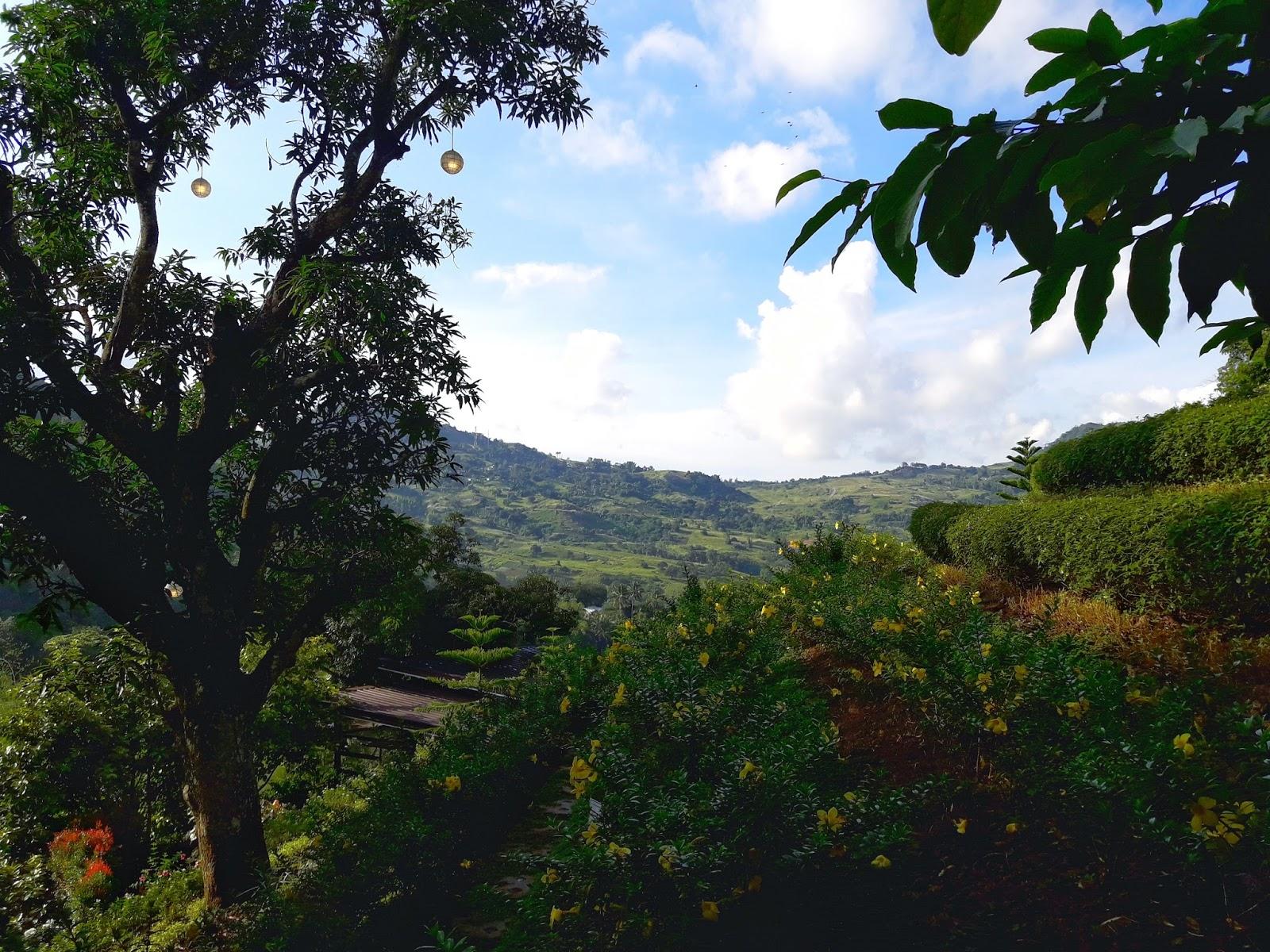 Terrazas De Flores Cebu Is A Floral Haven