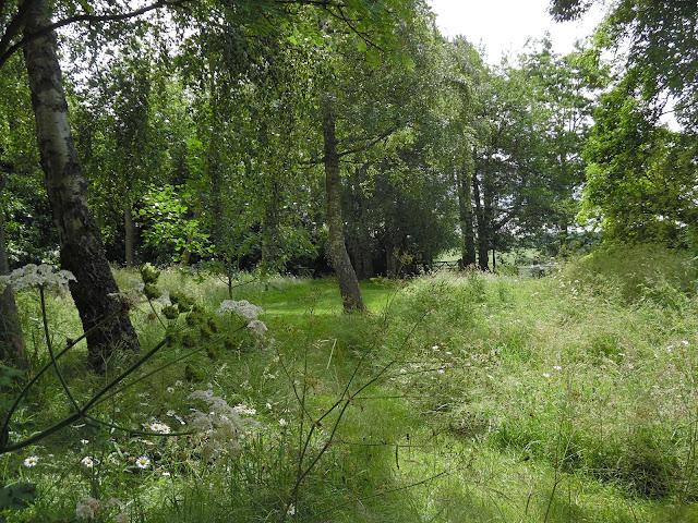 łąka w ogrodzie, ogród naturalistyczny