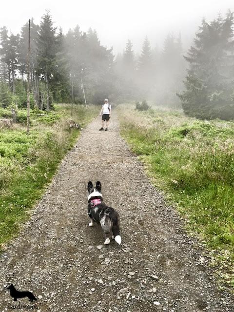 pies w górach, psy w górach, na wakacje z psem, wakacje z psem, z psem na urlop, urlop z psem, podróże z psem, z psem w podróży, karkonosze, sudety, góry, pies w górach, górski pies, góry, urlop, pies, cardimania