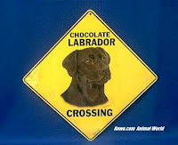 chocolate lab crossing sign