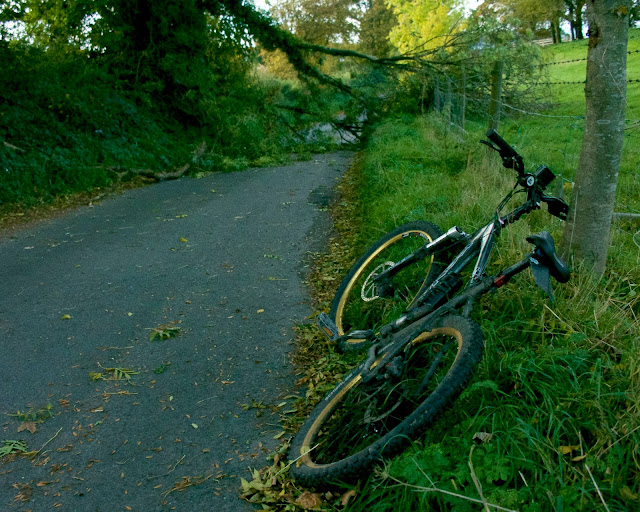 fallen tree cycling