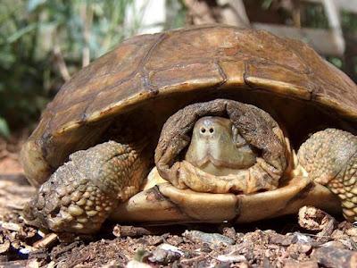 Efecto tortuga: ¿por qué se les encoge a los chicos con el frio?
