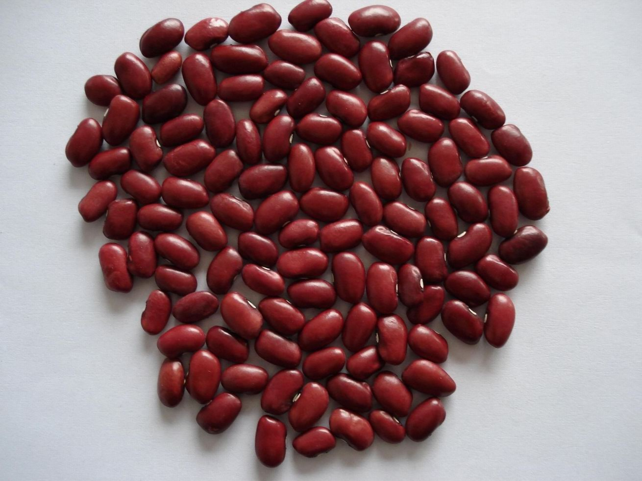 The Food Guru Worship 14 Kidney Bean