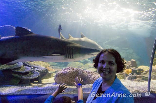 köpekbalığı ile baş başa, Turkuazoo akvaryumu Forum İstanbul AVM