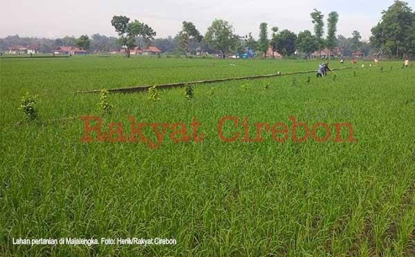 petani majalengka minta proyek bijb matikan lahan produktif