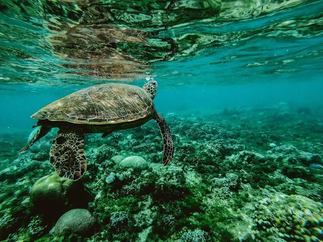 World's marine wilderness is dwindling