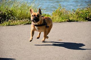Dog-the most loyal and faithful animal