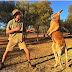 10 điều có thể bạn chưa biết về chuột túi (Kangaroo)