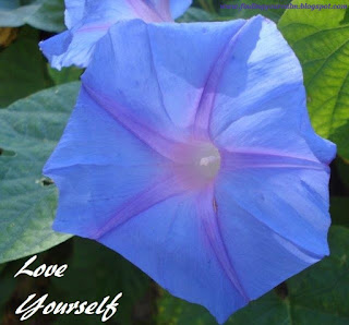 Image of a purple Morning Glory flower in bloom with text: Love Yourself
