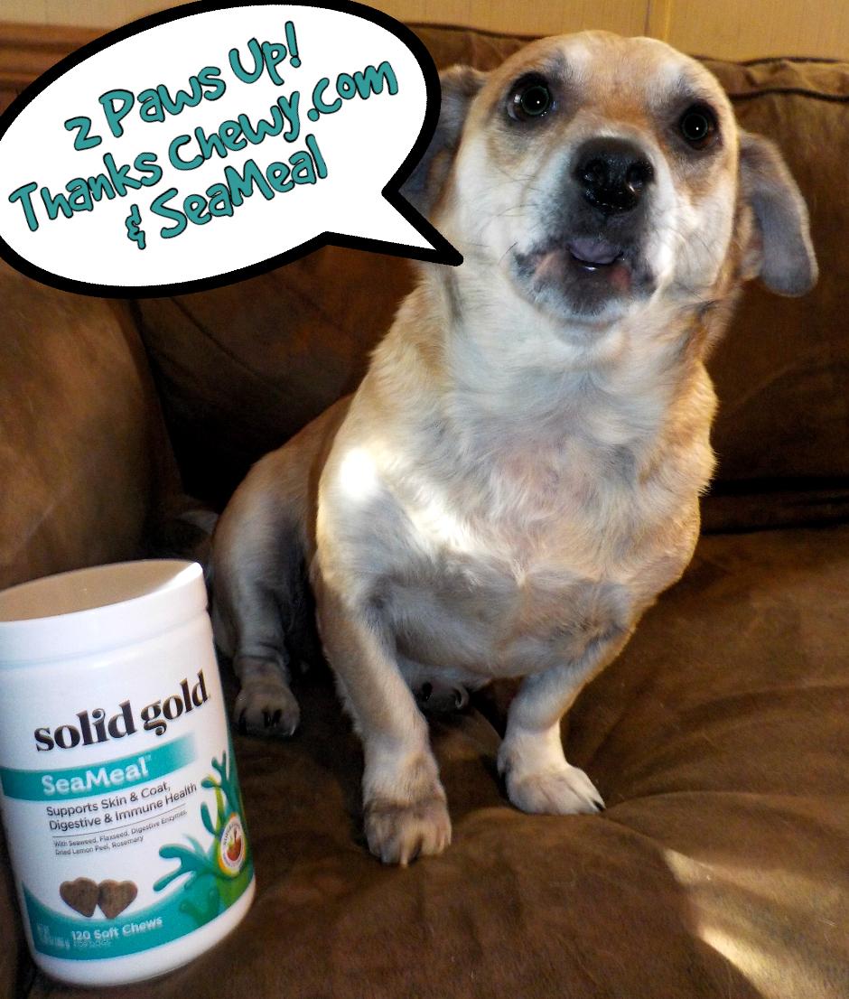 Iodine In Dog Food
