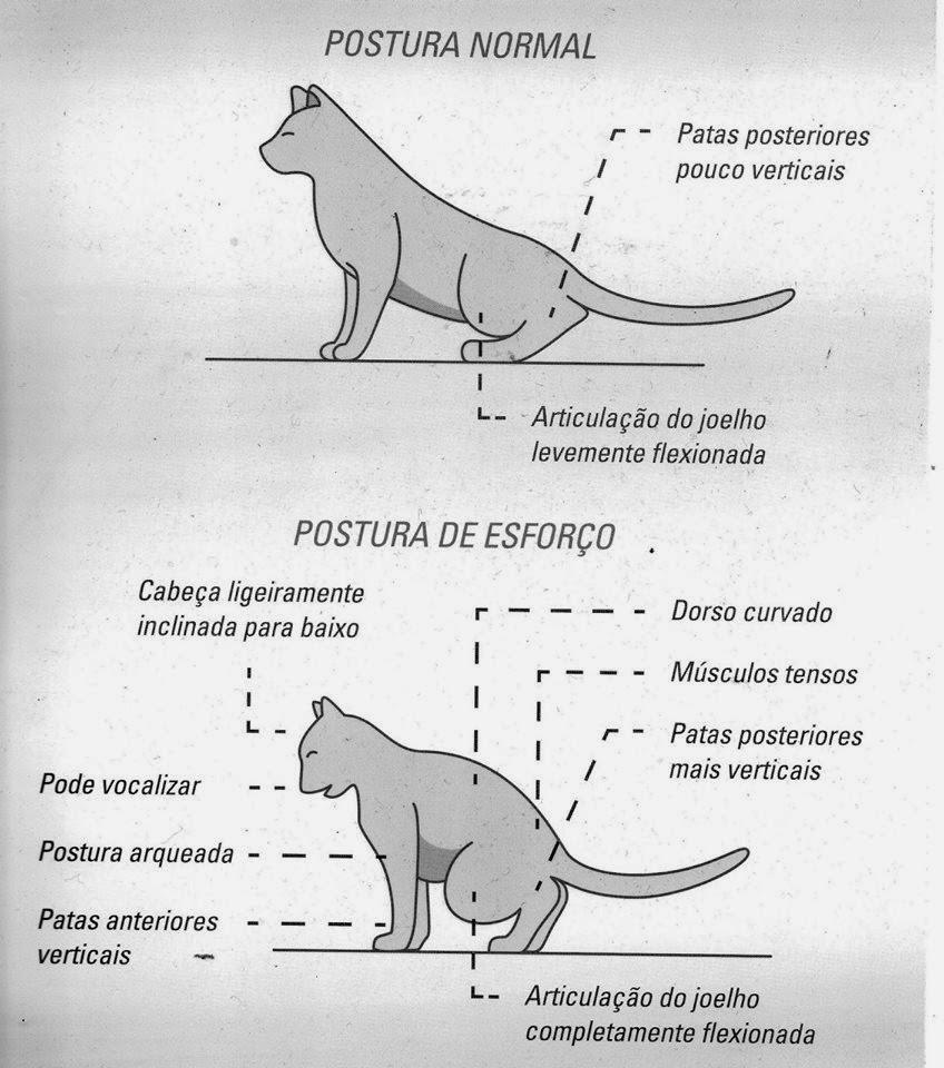 Dieta renal para gatos