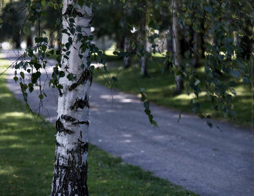 Kirjurinluoto, Pori, syksy, luonto, valokuvaus, valokuvaaminen, valokuvaaja Frida Steiner, Visualaddict, Suomi, ulkoilu, outdoors, koivu