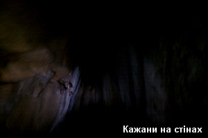 Кажани на стінах печери