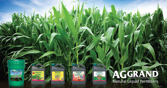 wholesale sales, aggrand