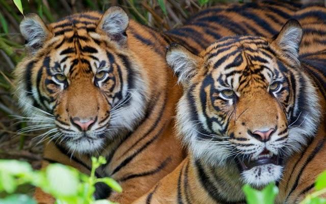 Hutan Dengan Hewan Endemik Paling Unik Di Indonesia