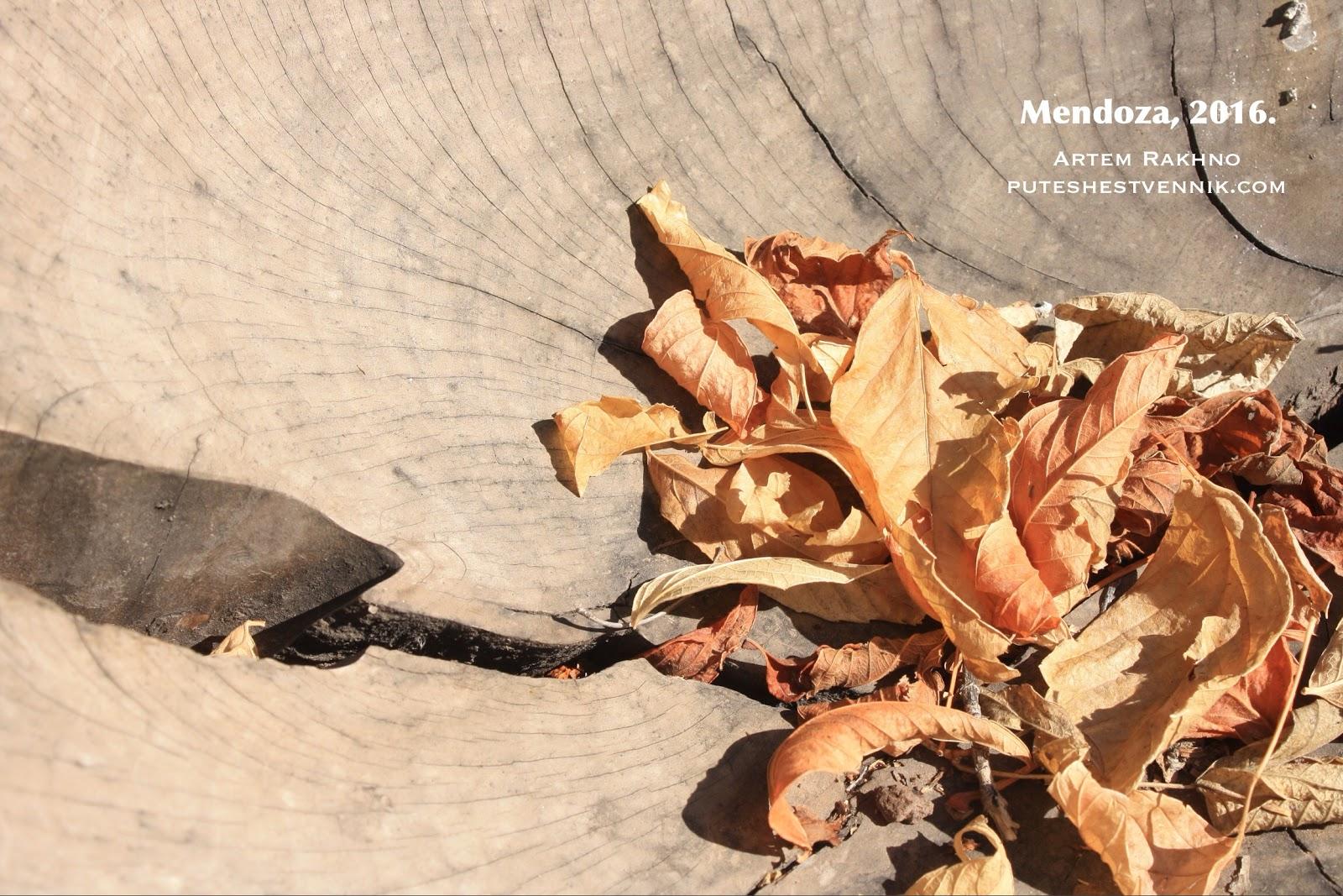 Сухие листья.