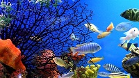 http://www.aluth.com/2014/06/Living-Marine-Aquarium-screensaver.html