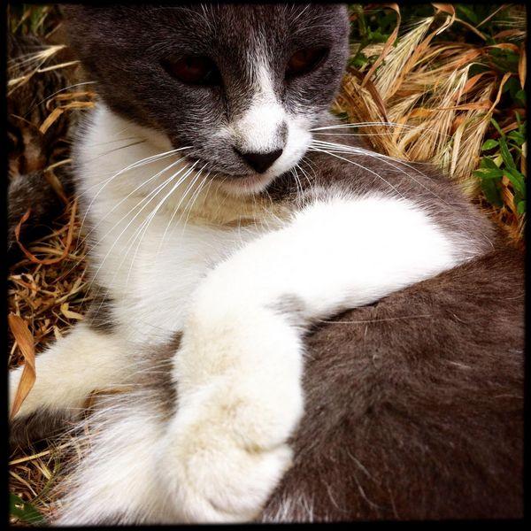 stray cat spain