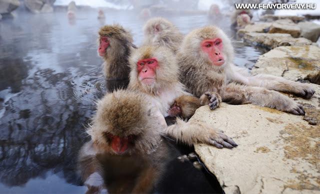 A 100. majom elmélete és a mindent összekötő energiamezők