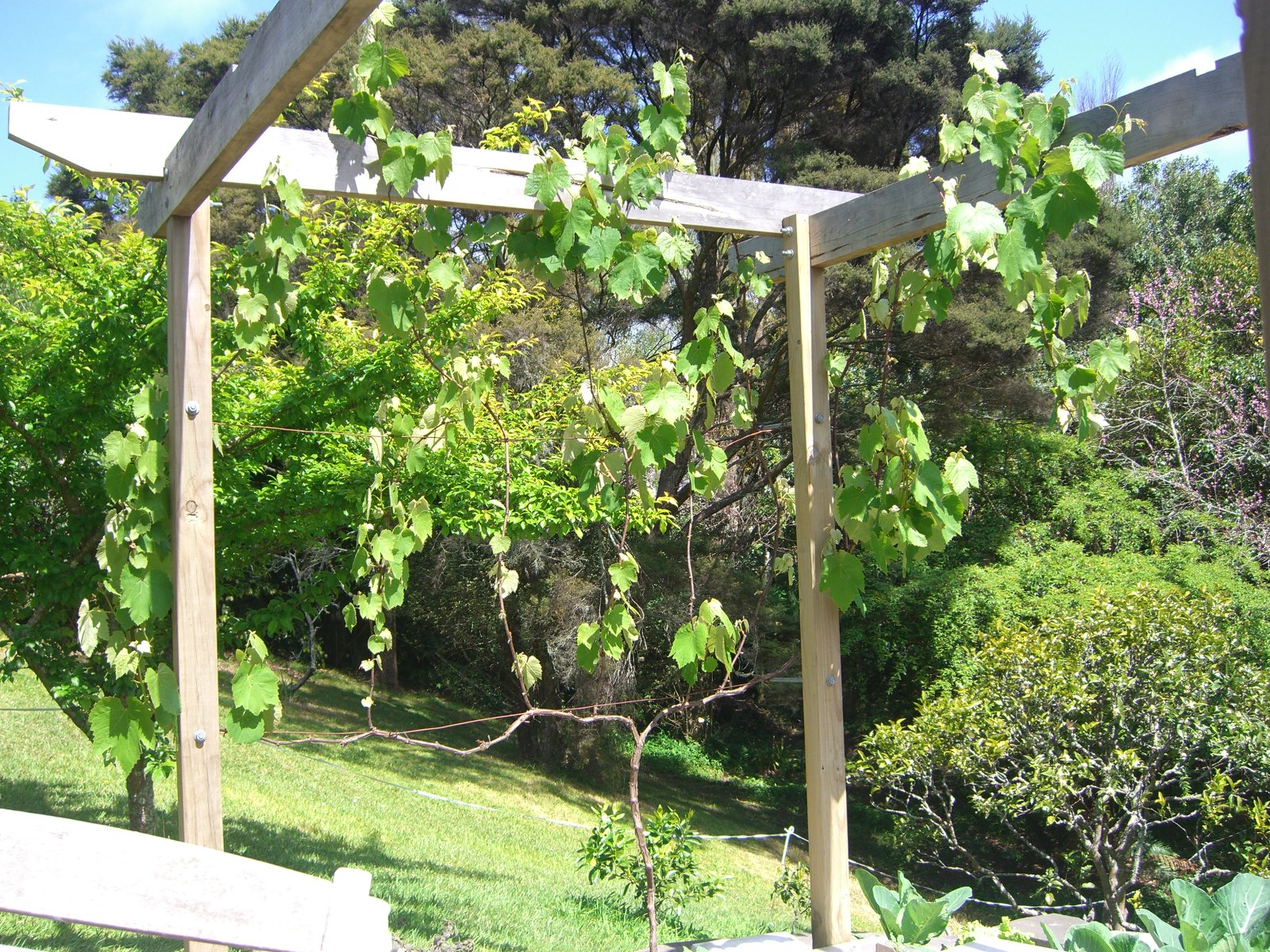 Dave's Garden: Growing Grapes