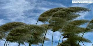 Rüyada Rüzgar Görmek ile alakalı tabirler, Rüyada görmek ne anlama gelir, nasıl tabir edilir? Rüya tabirlerine göre ve dini rüya tabirlerinde anlamı tabiri nedir