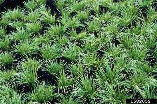 22 nama tanaman pengisi yang biasa di gunakan pada taman vertikal