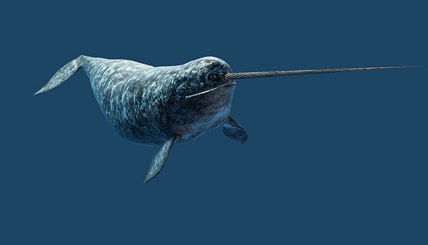 jenis ikan paus