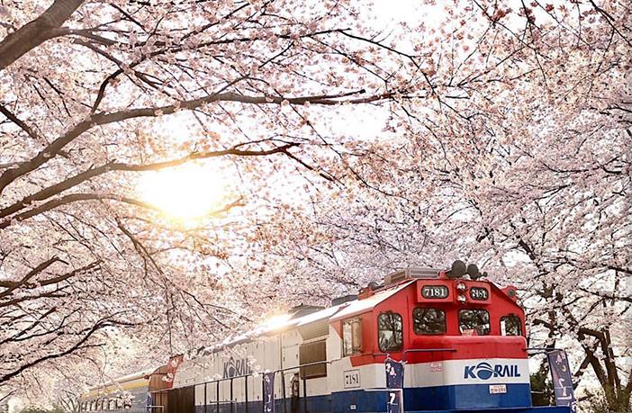 Kết quả hình ảnh cho spring in korea