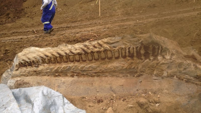 Massive dinosaur fossil unearthed in Alberta