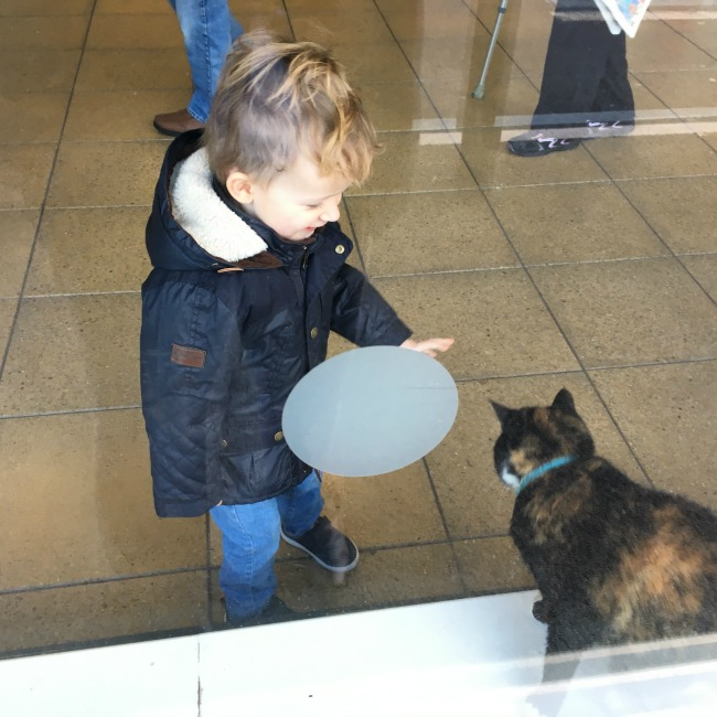 Our-Weekly-Journal-23rd-Jan-2017-toddler-with-sainsburys-cat