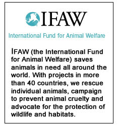 IFAW - Internation Fund for Animal Welfare
